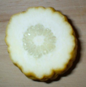 Cross-section of an etrog